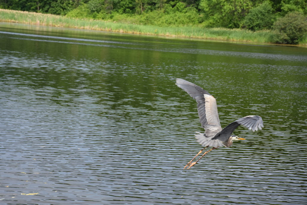 Heron at BP